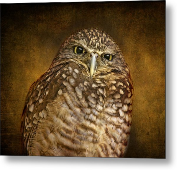 Burrowing Owl Metal Print