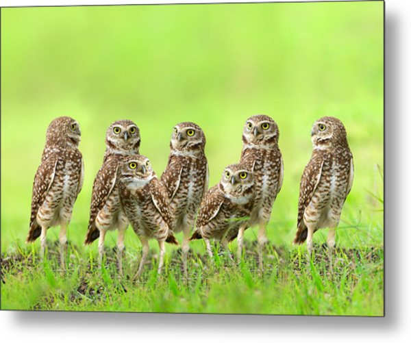 Burrowing Owl Metal Print by Thy Bun