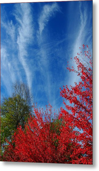 Burst Of Color Metal Print by Gerry Tetz