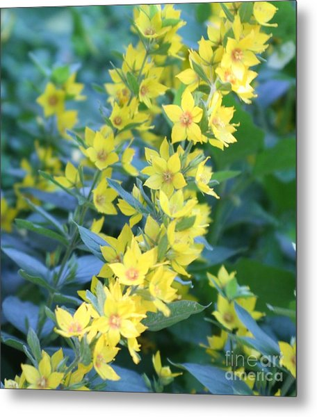 Burst Of Yellow Metal Print by Amy Holmes