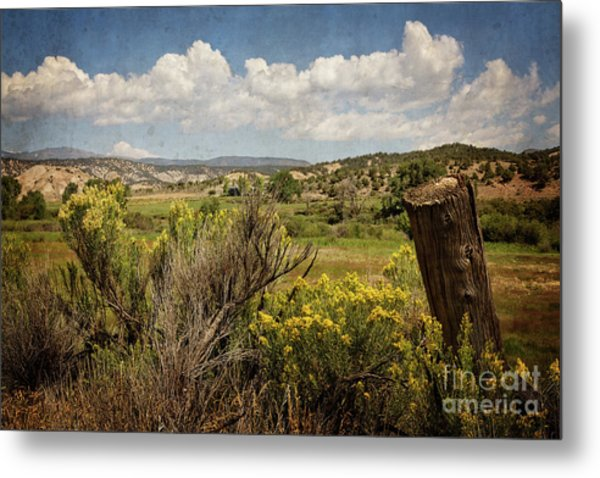 Bush Creek Metal Print