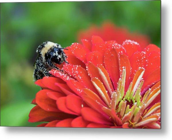 Busy Bee Metal Print by Denise McKay