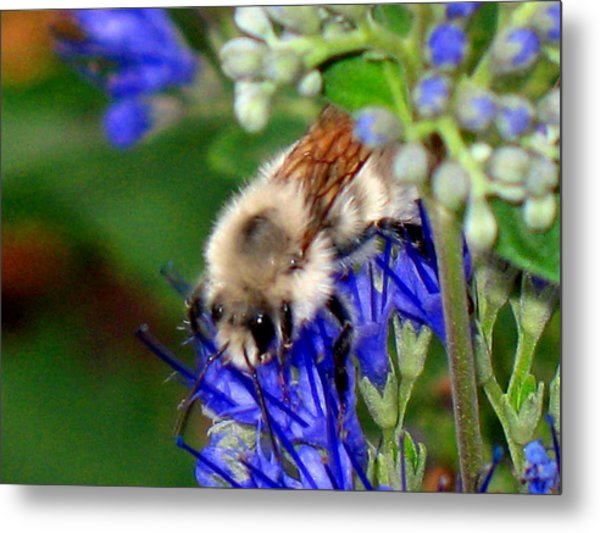 Busy Bee IIi Metal Print by Gigi Kobel