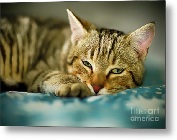 Busy Day Metal Print by Alessandro Giorgi Art Photography