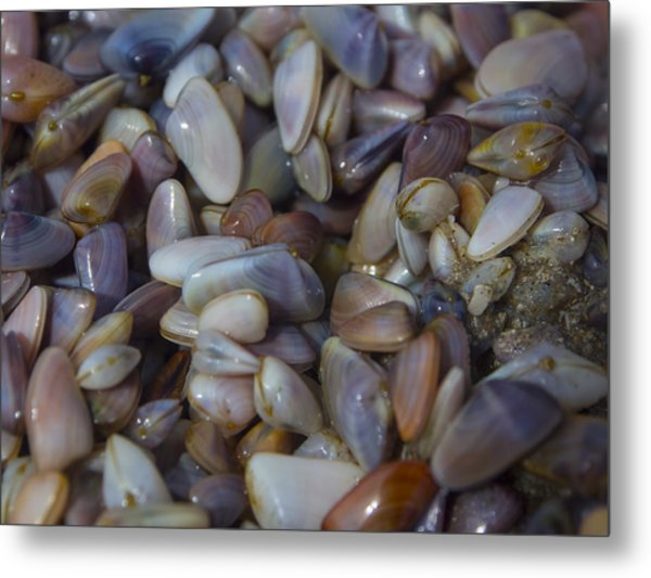 Buttefly Clam Rainbow Metal Print