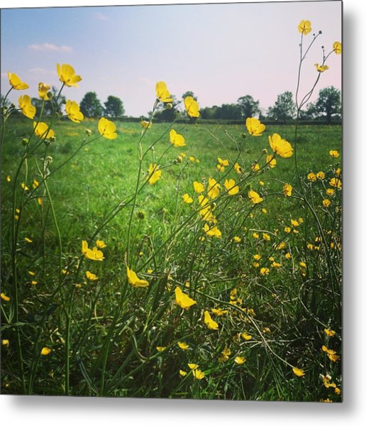 Buttercups Meadow Metal Print