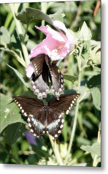 Butterflies Are Free 3 Metal Print