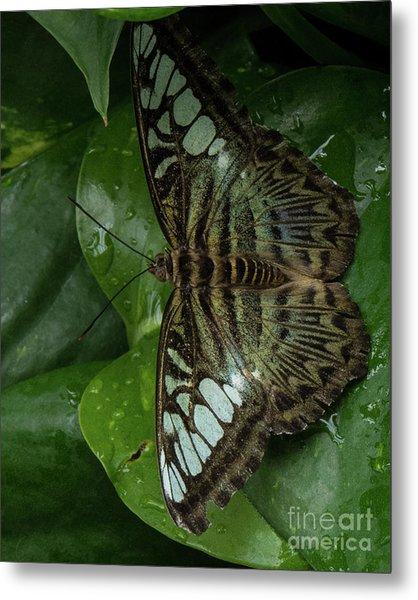 Butterfly 4 Metal Print