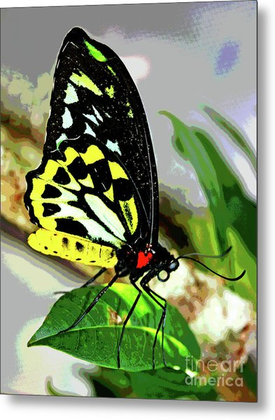 Butterfly 7 Metal Print