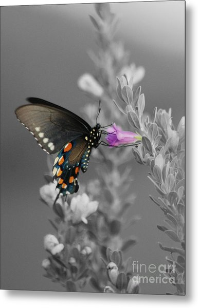 Butterfly And Flower Metal Print by Jim Wright