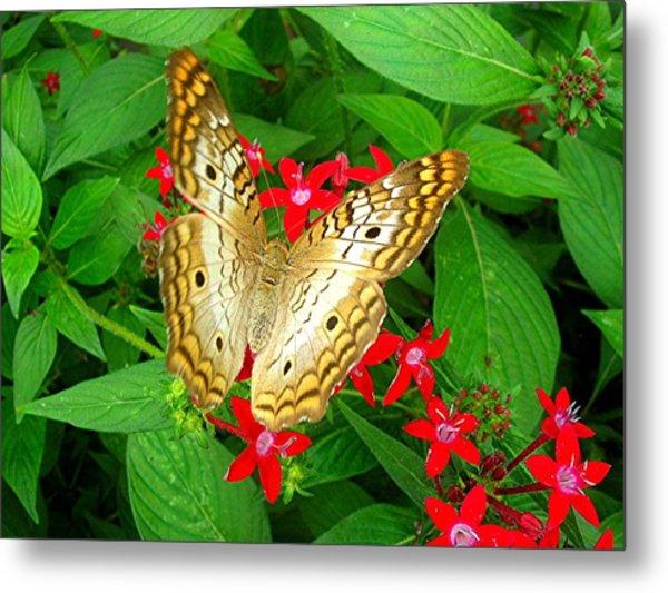 Butterfly And Red Star Sprig Metal Print by Caroline  Urbania Naeem