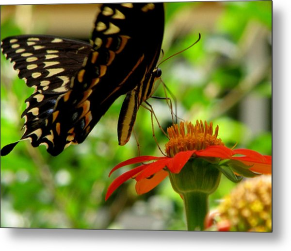 Butterfly And The Flower Metal Print by Dottie Dees
