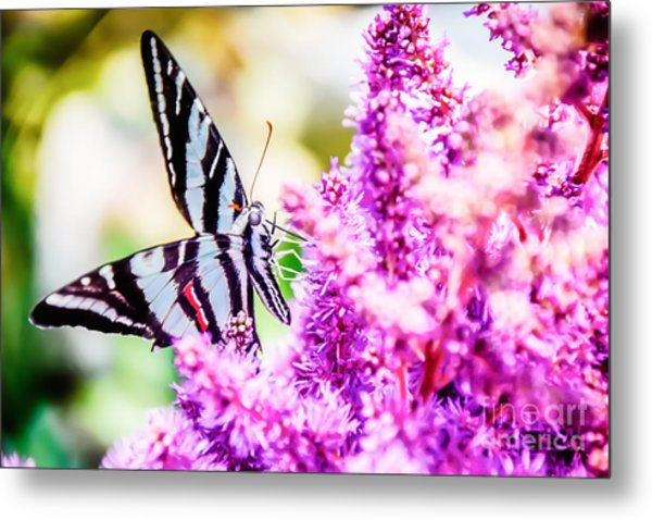 Butterfly Beautiful  Metal Print