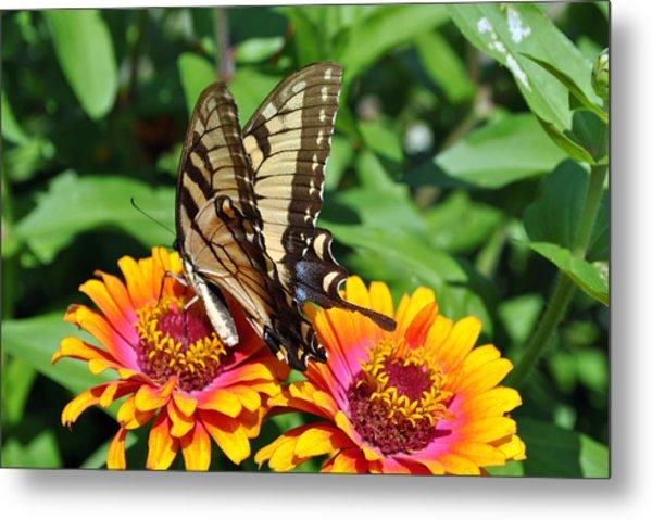 Butterfly Beauty II Metal Print by Elizabeth Del Rosario-Baker