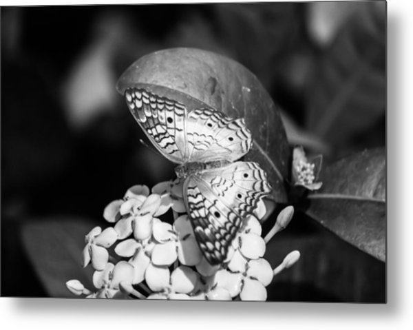 Butterfly Bw - Ins18 Metal Print