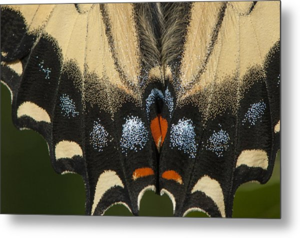 Butterfly Colors Metal Print