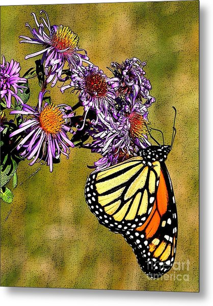 Butterfly Delight Metal Print by Diane E Berry