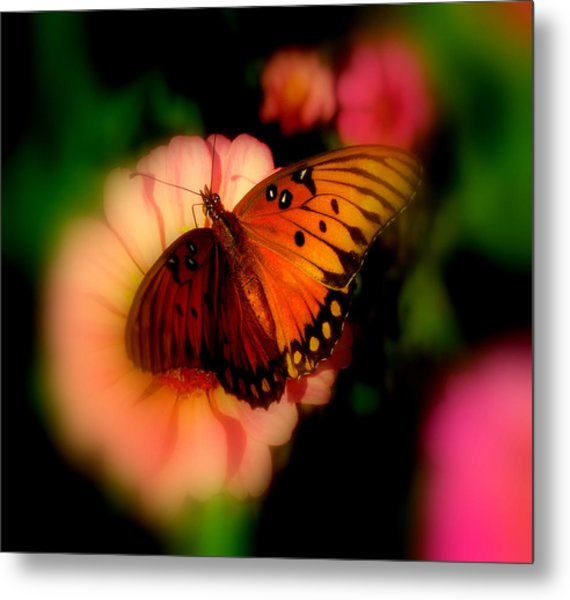 Butterfly Dreams Metal Print by Dottie Dees