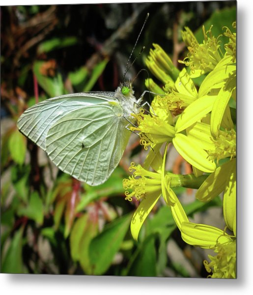 Butterfly Feasting On Yellow Flowers Metal Print