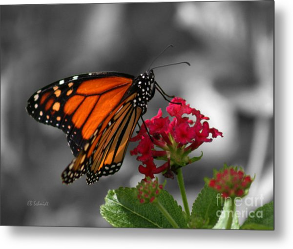 Butterfly Garden 01 - Monarch Metal Print