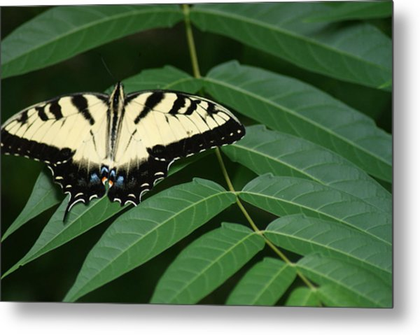 Butterfly Metal Print by Heather Green