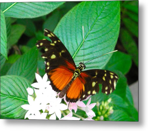 Butterfly House  Metal Print
