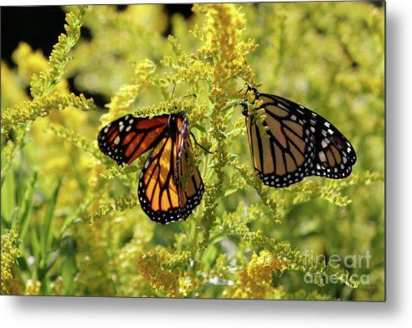 Butterfly In Fall  Metal Print