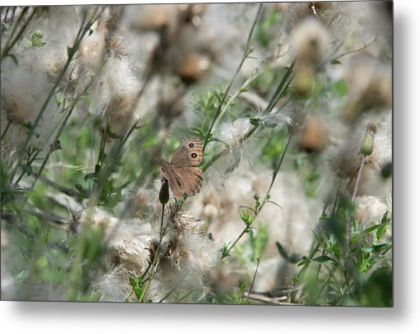 Butterfly In Puffy Seed Heads Metal Print