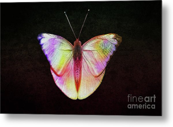 Butterfly In Retro  Metal Print