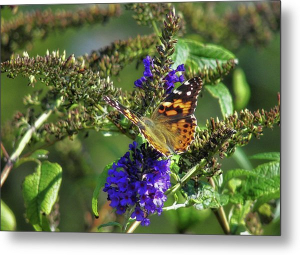 Butterfly Joy Metal Print by JAMART Photography