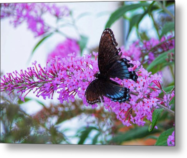 Butterfly Kisses Metal Print by JAMART Photography