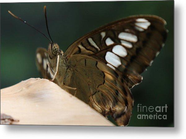 Butterfly Macro Metal Print