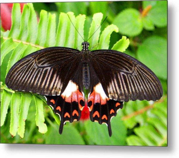 Butterfly Maze Metal Print by Jean Haynes