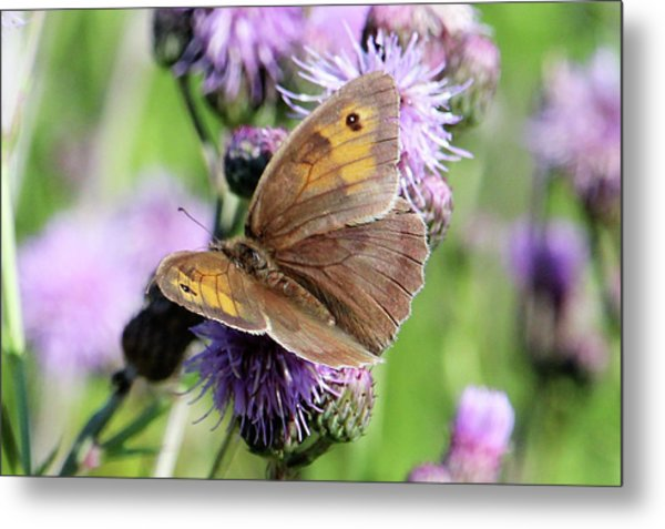 Butterfly Photograph  Metal Print