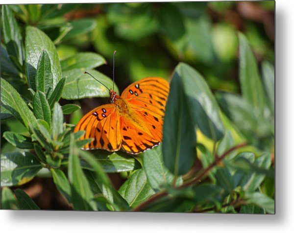 Butterfly On A Sunny Day Metal Print