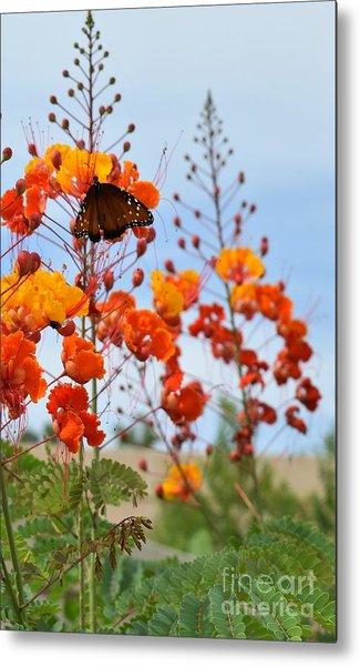 Butterfly On Bird Of Paradise Metal Print