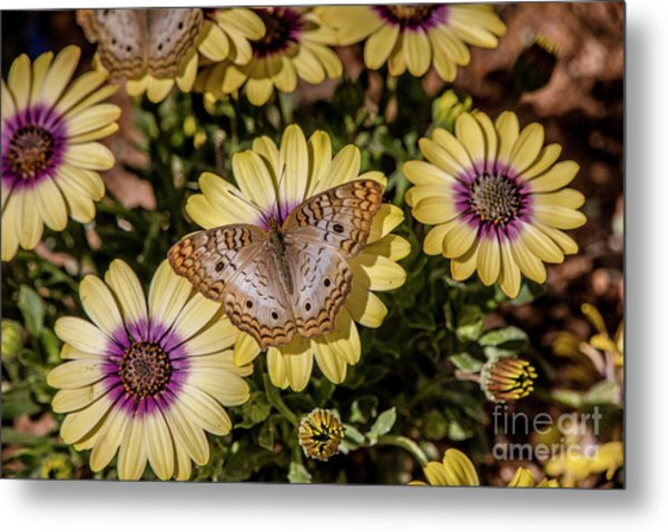 Butterfly On Blossoms Metal Print