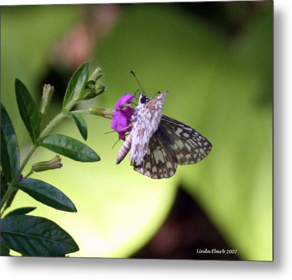 Butterfly On Heather Metal Print by Linda Ebarb