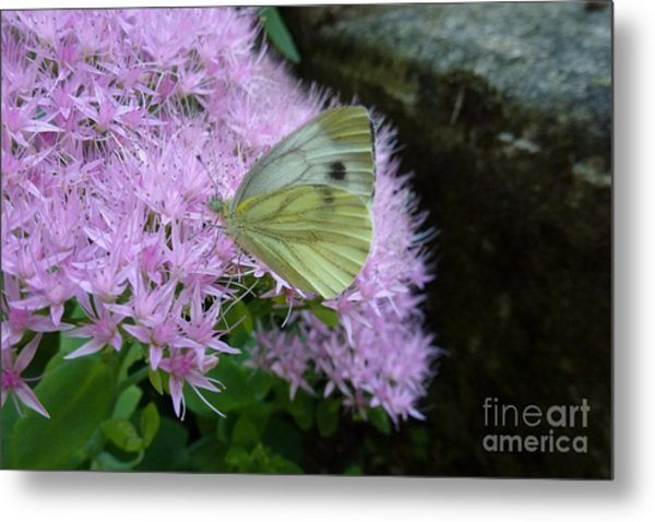 Butterfly On Mauve Flowers Metal Print