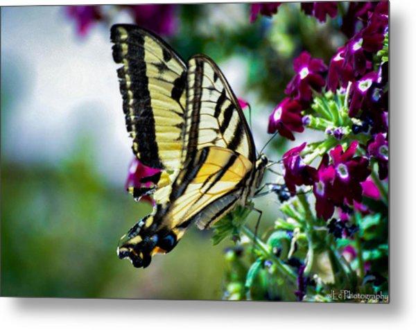 Butterfly On Purple Flowers Metal Print