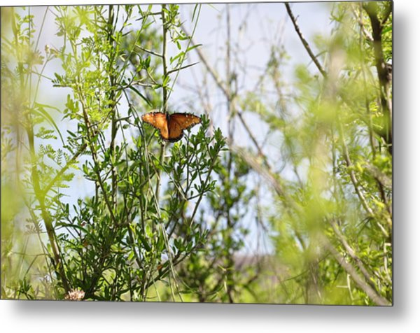 Butterfly On Schrub Metal Print by Thor Sigstedt