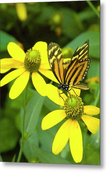 Butterfly On Yellow Flower Metal Print