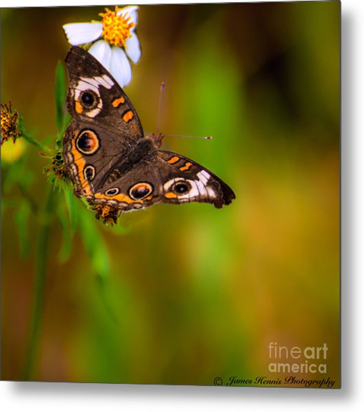 Butterfly One Metal Print
