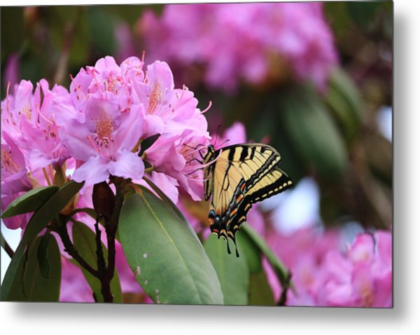 Butterfly Paradise Metal Print