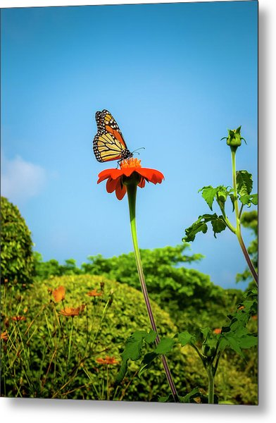 Butterfly Perch Metal Print