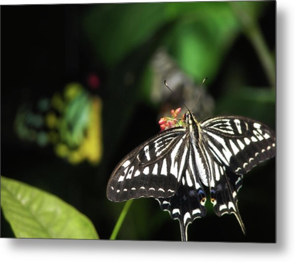 Butterfly Perfect Metal Print by JAMART Photography