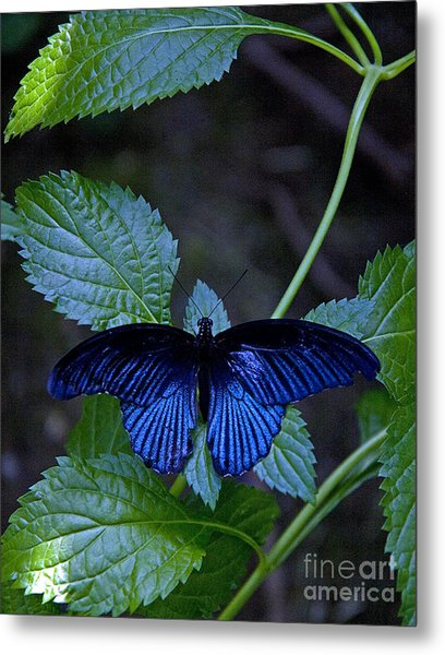 Butterfly Place Metal Print