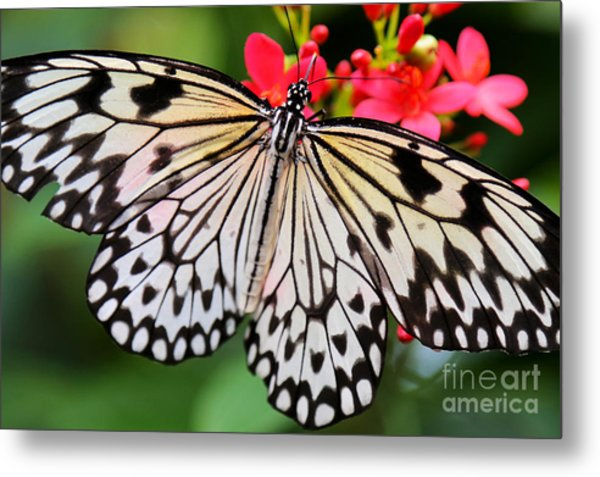 Butterfly Spectacular Metal Print