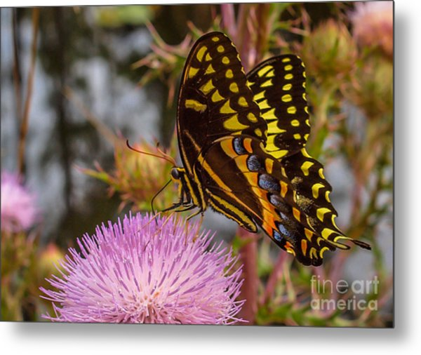 Metal Print featuring the photograph Butterfly Visit by Tom Claud