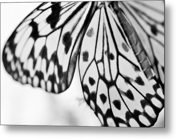 Butterfly Wings 3 - Black And White Metal Print